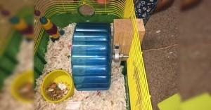 Arduino měření křečkova kolečka